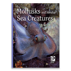 Mollusks and Similar Sea Creatures cover